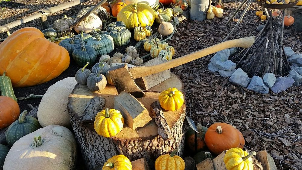 Happy Halloween Halloween Scene Hatchet Pumpkin Camp Fire Scenery Shot Pumpkin Patch Display Different Sizes Ready For Halloween Halloween Pumpkins