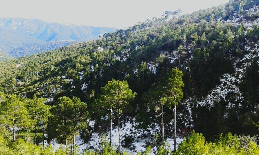 Amo las montañas Ilovemountains Beautynature Catalunya Muntanya Bosc Into The Woods Trees Tree And Sky For The Love Of Trees ~ EyeEm Best Shots - Trees