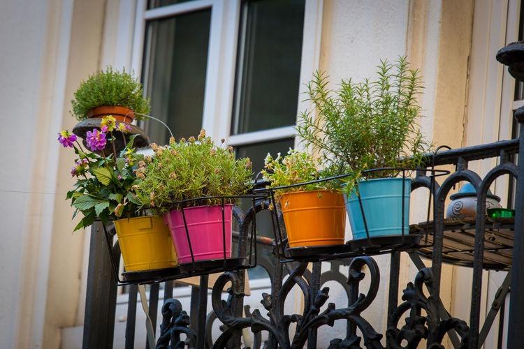 Potted plants in front of building