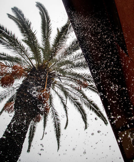 Close-up of palm tree during winter