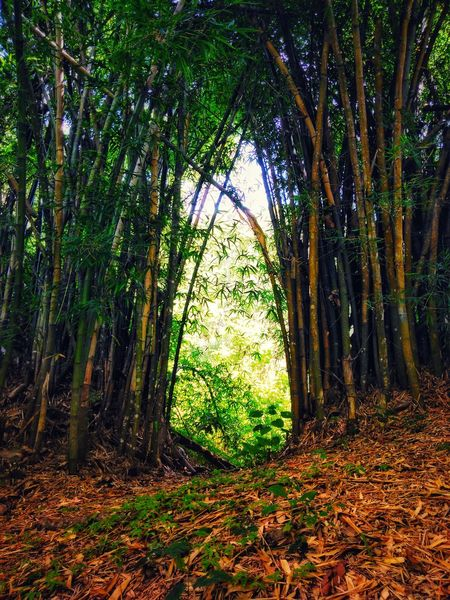 Tree Forest Branch Leaf Tree Trunk Grass Green Color Sky Bamboo Grove Bamboo Dense Change First Eyeem Photo Autumn