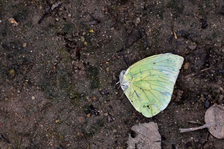 High angle view of butterfly on ground