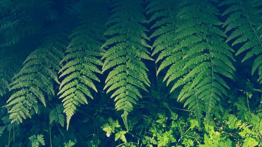 Close-Up Of Ferns
