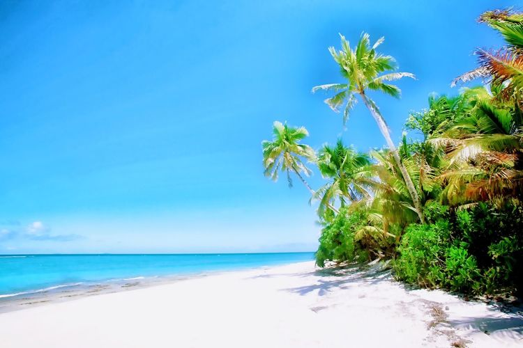 Fiji-Islands, Palmtree, Beach Sea Beach Nature Horizon Over Water Water Palm Tree Scenics Beauty In Nature Tranquil Scene Blue Tranquility Sky Sand Shore Outdoors Travel Destination Travel Destinations From My Point Of View Fiji Travel Photography Indian Ocean Beauty In Nature Tree