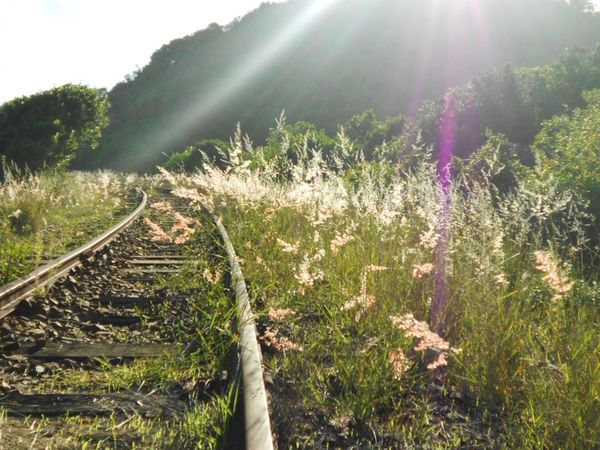 South Africa Wilderness Railroad Track Sunbeam Grass Field Growth Sunlight Beauty In Nature Plant The Way Forward Rural Scene Nature Sunny Scenics Peaceful Railway Track Rail Transportation Tranquility Nature