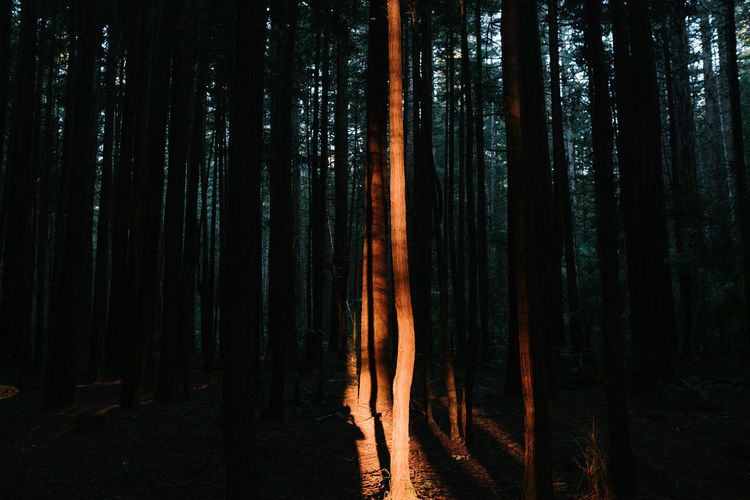 Forest Tree Land WoodLand Plant Trunk Tree Trunk Tranquility Tranquil Scene No People Nature Outdoors Night Scenics - Nature Beauty In Nature Growth Non-urban Scene Environment Silhouette Landscape Capture Tomorrow
