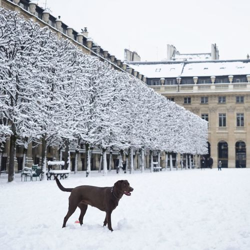 City Dogs Animal Themes Architecture Building Exterior Built Structure Cold Temperature Day Dog Domestic Animals Full Length Mammal Nature No People One Animal Outdoors Pets Side View Sky Snow Snowing Street Streetphotography Weather Winter