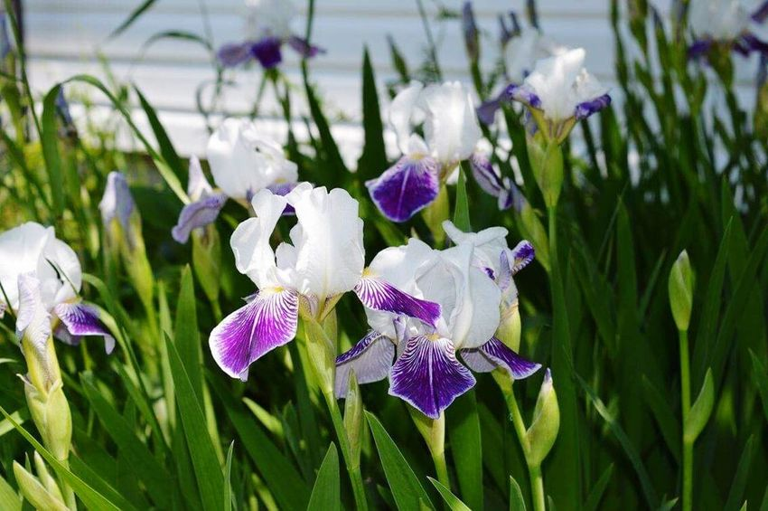 Flower Growth Beauty In Nature Nature Petal Purple Plant Fragility Flower Head Freshness Day Iris - Plant No People Focus On Foreground Outdoors Green Color Blooming Close-up Snowdrop Crocus