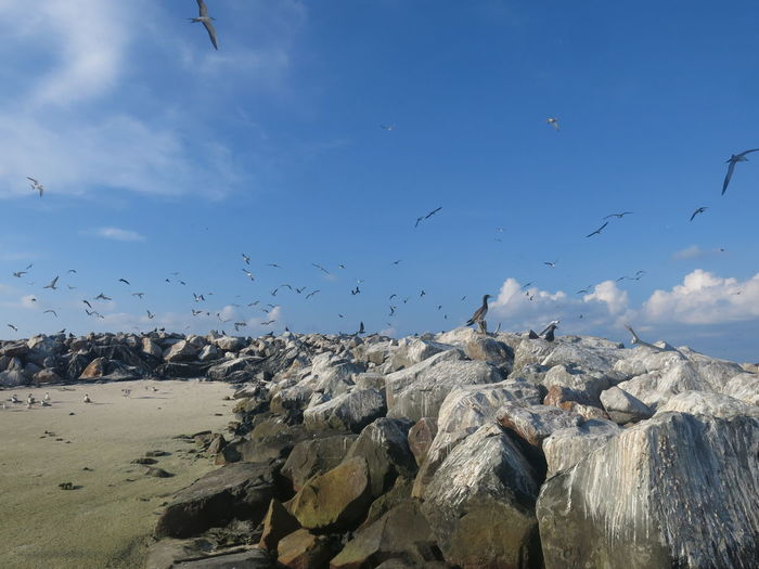 Flock of birds flying over rocks