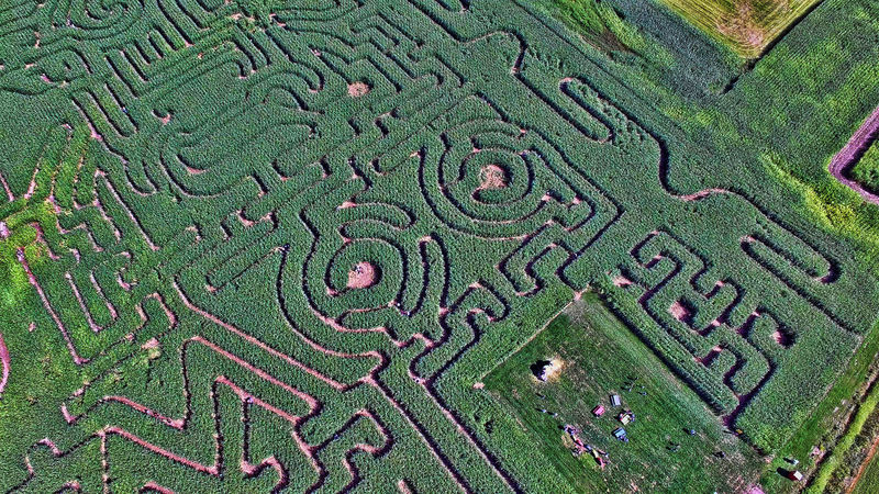 Aerial View Corn Maze Drone  Green Color Growth Maze Nature New Brunswick, Canada No People Outdoors