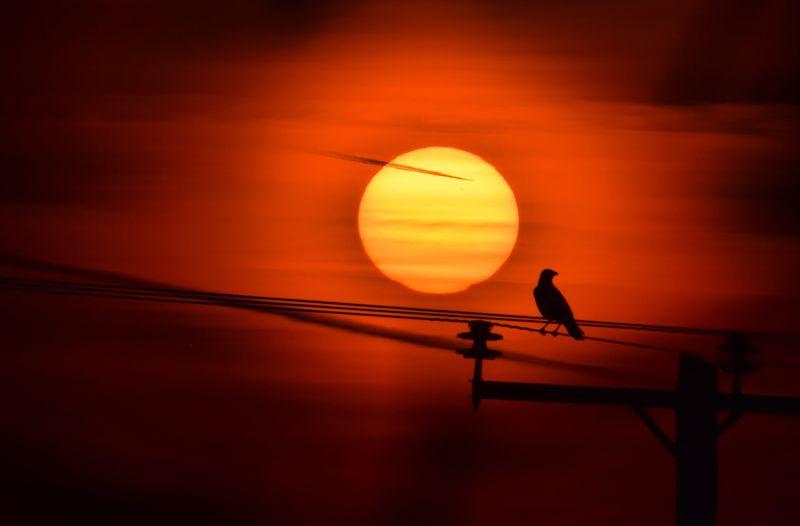 Silhouette bird perching on orange sunset
