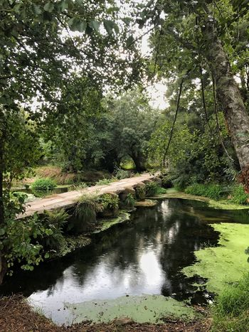 Riverbank Nature Water Scenics Tranquility Non-urban Scene Tranquil Scene Green Color Freshness Roman Bridge