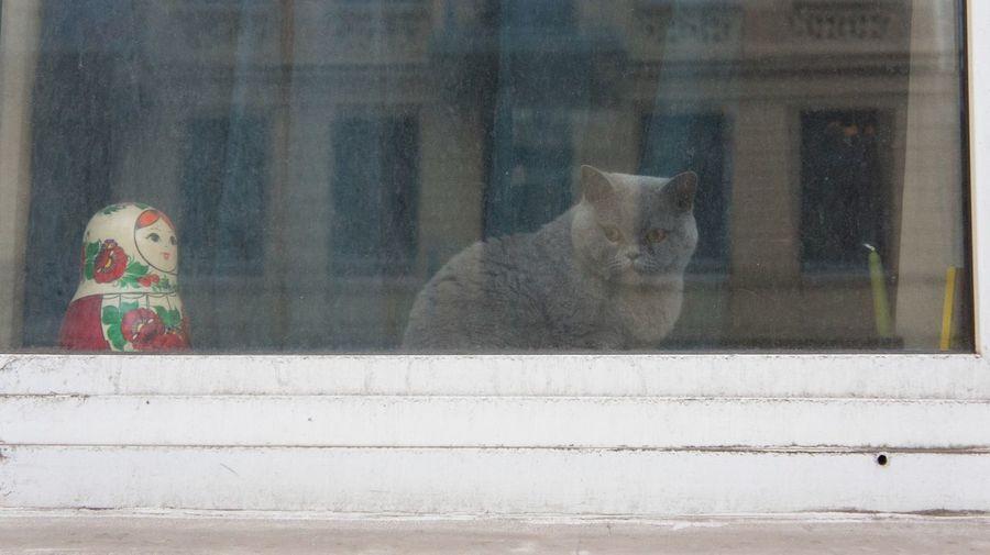 Ghostcat in