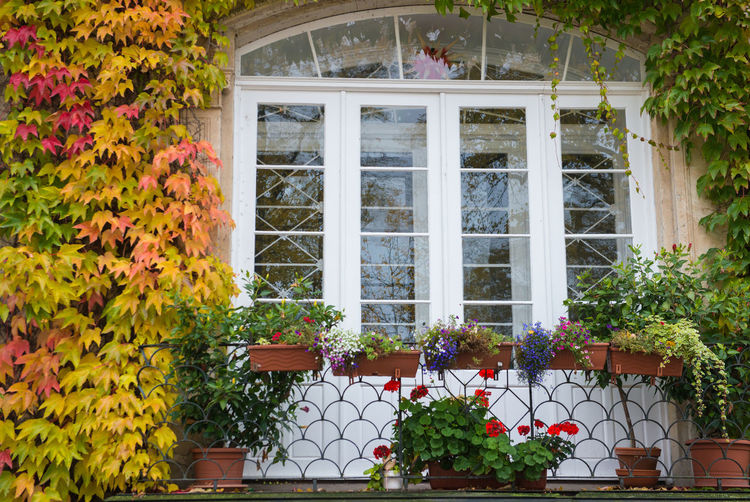Orange ivy on house with white window Plant Flowering Plant Architecture Flower Built Structure Building Exterior Window Building Growth Day No People Nature House Beauty In Nature Potted Plant Freshness Leaf Residential District Plant Part Multi Colored Outdoors Flower Pot