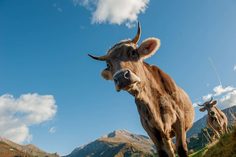 Low angle view of giraffe on mountain against sky