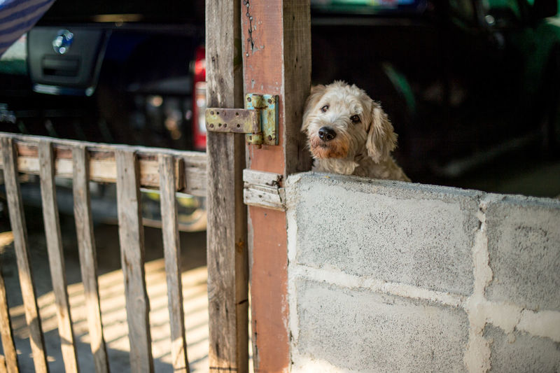 Close-Up Of Dog By Fence