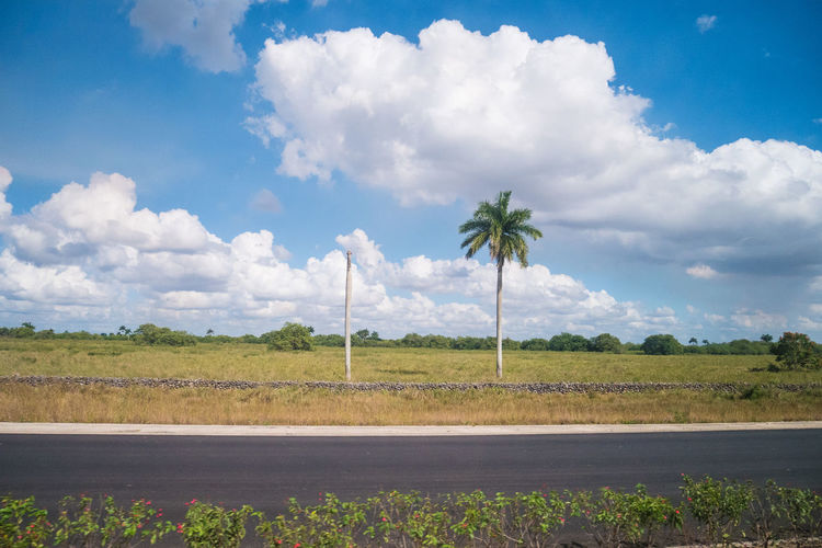 Cuba Beauty In Nature Carribean Cloud - Sky Day Growth Landscape Nature No People Outdoors Road Scenics Sky The Way Forward Tranquil Scene Tranquility Tree