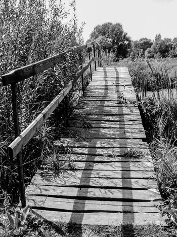 Black And White Black And White Collection  Black And White Photography Bridge Day Fence Footpath Growth Nature No People Non-urban Scene Outdoors Plant Railing Scenics Sky Solitude Steps The Way Forward Tranquil Scene Tranquility Tree Wooden Wooden Bridge Monochrome Photography
