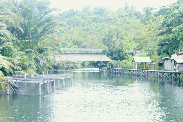 Papua Jayapura Nature Water Outdoors Tree Day Fotography INDONESIA Wonderful Indonesia Yoka River