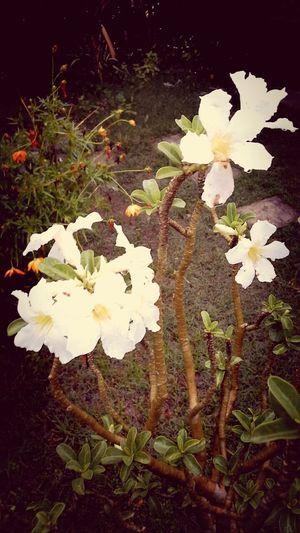 White Flowers Eyemnaturelover
