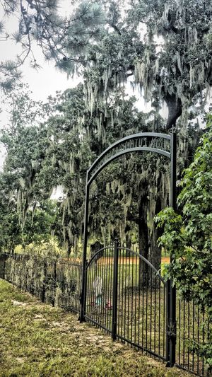 Graveyard Collection Graveyard Beauty Mossy Oaks Oak Trees