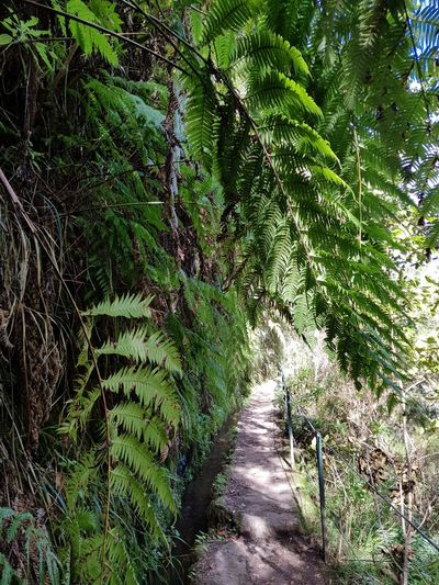 Levada Walk Green Color Caldeirão Verde Hike Trail Fern Bildfolge Photography Landscape_Collection Landscape_photography Vacation Time Madeira Island Growth Nature Day No People Tranquility Green Color Outdoors Beauty In Nature Plant