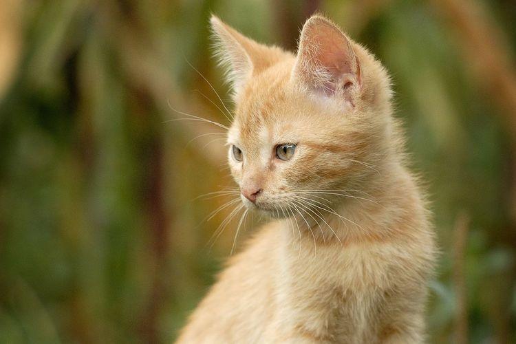 Rylsk Природа Russia животные кот Cat