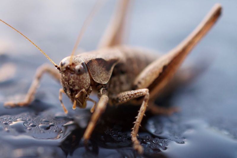 Close-Up Of Grasshopper On Wet Surface