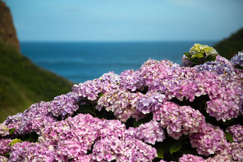 Beauty In Nature Blooming Close-up Day Flower Flower Head Freshness Nature No People Outdoors Pink Color Plant Scenics Sea Sky Tranquility Water