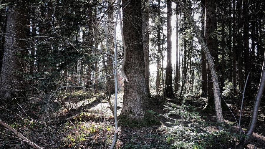 #tree#forest#spring#light#sunlight #niceview#springiscoming #nature #naturephotography #outdoor#outside #outdoorphotography #outsidephotography #photography #picoftheday #photooftheday # Full Frame Day Backgrounds No People Nature Outdoors Tree Close-up