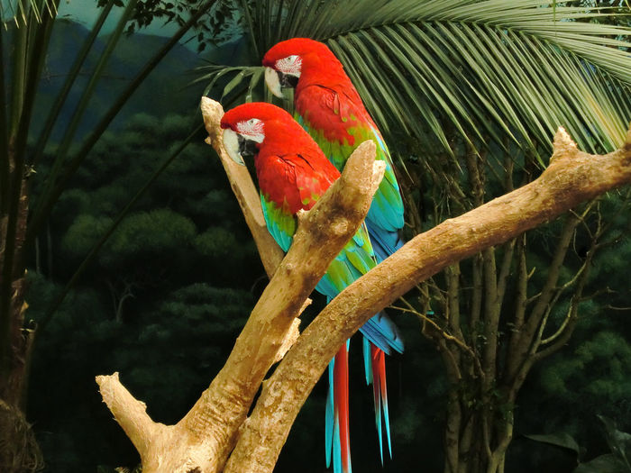 Animal Themes Animal Wildlife Animals In The Wild Beauty In Nature Bird Branch Day Green Color Macaw Nature No People Outdoors Parrot Perching Rainbow Lorikeet Scarlet Macaw Tree