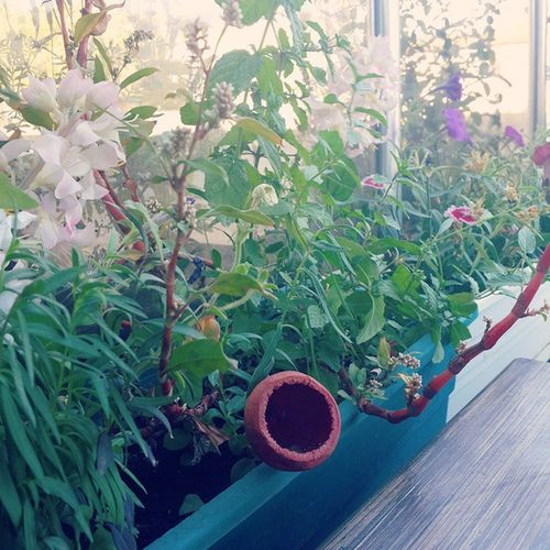 Immm miss :) Flowers Colourful Dersim Tunceli