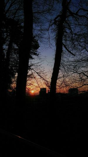 underTREEcity . Sunset Tree Silhouette Nature Captured Nature Capture Natural Capture .. Natur Sun Scenics Tranquil Scene Outdoor Abendstimmung Framed By Trees in Bregenz Stadtbregenz Bregenzstadt