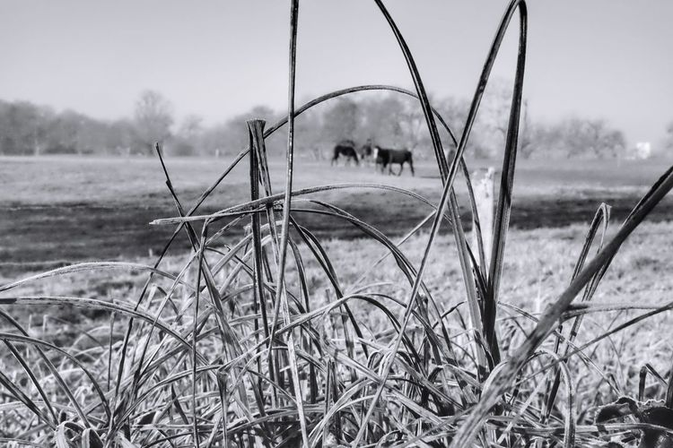 Inside Tranquil Scene Nature Tranquility Grass Field No People Sky Scenics Outdoors Day Beauty In Nature Landscape Growth Water Beach Horse Horse Photography  Picoftheday Photooftheday Master_shots Exceptional Photographs Beauty In Nature Nature