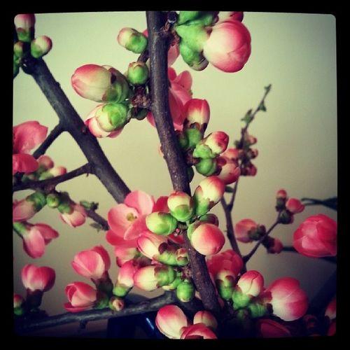 primavera in casa ... Spring Time Flower Eyem Nature Lover Fiordipesco