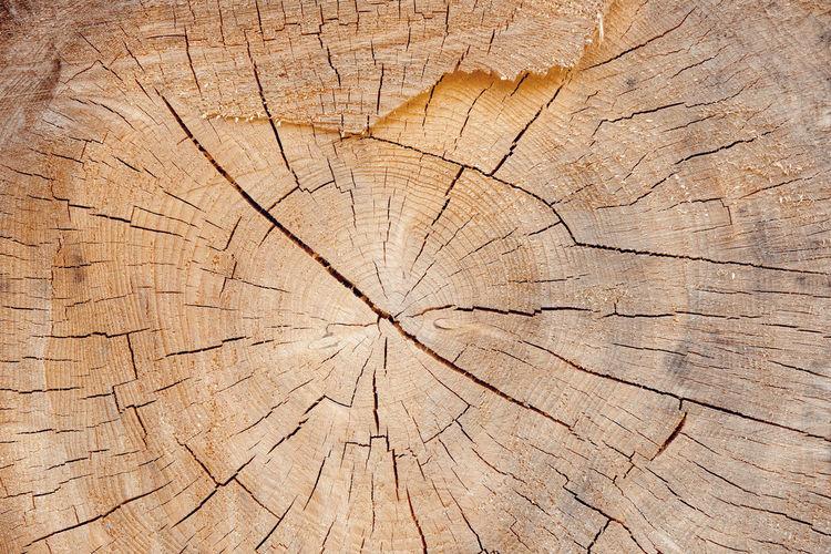 Full frame shot of tree stump in forest