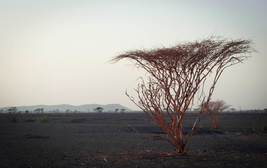 Tree Nature Desert Alone