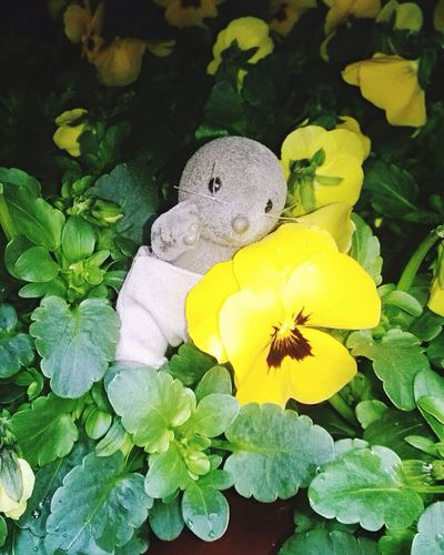 Tis Photo Shoot EyeEm Gallery Hi! Hello World ✌ Check This Out Cheese Hello World Taking Photos Hanging Out Showcase March I LOVE PHOTOGRAPHY Cheese! Lovely Childhood Viola Spring Springtime Spring Flowers Spring Into Spring Spring Has Arrived Yellow Flower Tis❣ Things I Like