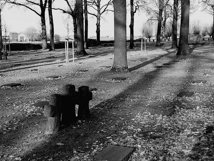 Day Outdoors Field Shadow Sunlight Graveyard Headstones Sky No People Tree Nature