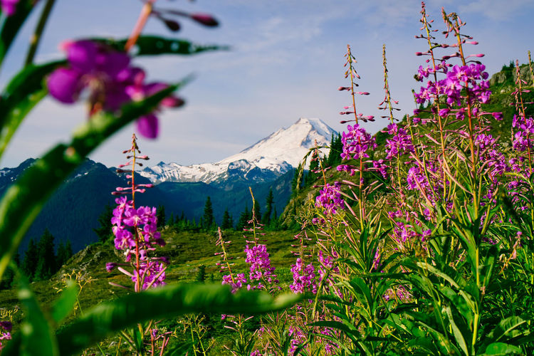 Beauty In Nature Blooming Bougainvillea Close-up Crocus Day Flower Flower Head Fragility Freshness Growth Mountain Nature No People Outdoors Petal Pink Color Plant Purple Sky Tranquility