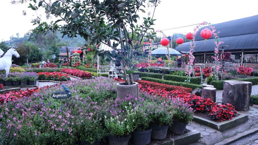 Begonia Park in