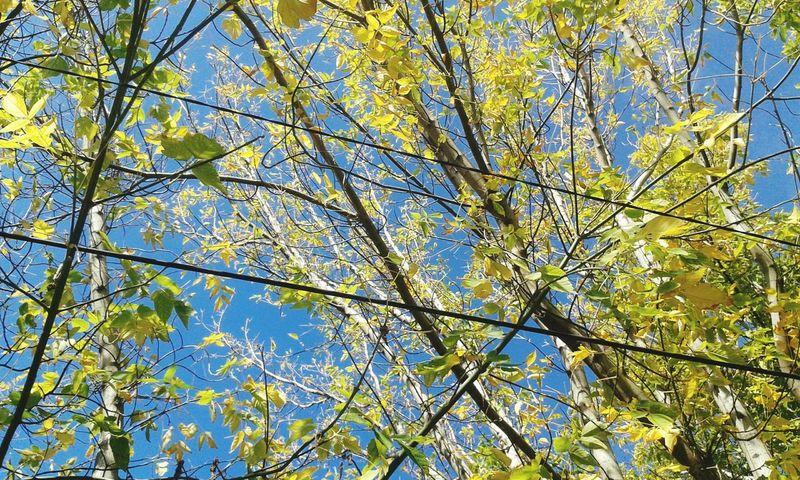 Я вернулась)). осень 🍁 листья желтые осеньвгороде Autumn Autumn🍁🍁🍁