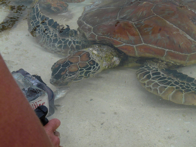 Animal Wildlife Animals In Captivity Animals In The Wild Day High Angle View Human Body Part Human Hand Indoors  Men Nature One Animal One Person People Real People Reptile Sea Life Sea Turtle Swimming Tortoise Tortoise Shell Turtle Water Second Acts EyeEmNewHere EyeEmNewHere