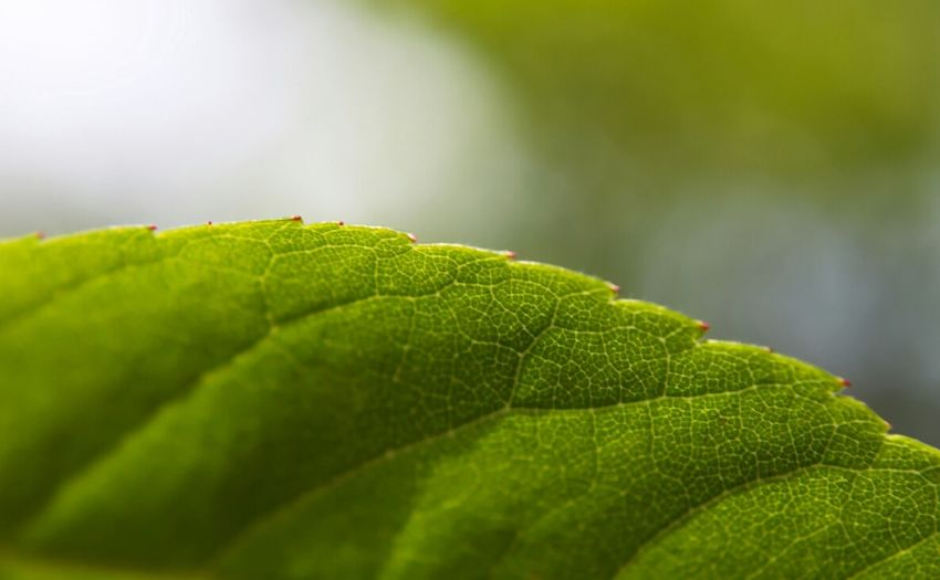 Close-up of cropped green leaf against blurred background