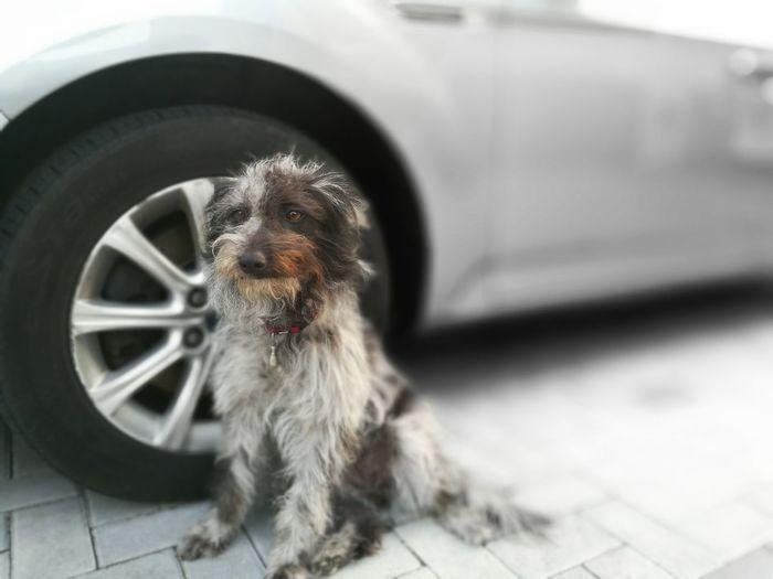 Dog One Animal Tire