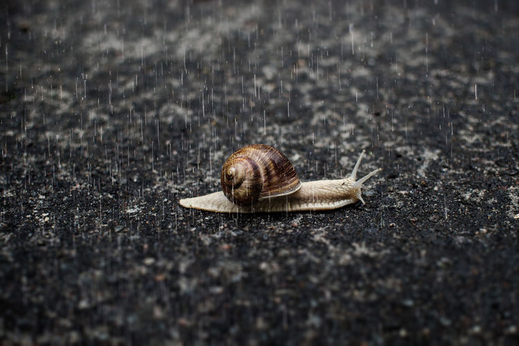 Animal Themes Beauty In Nature Close-up Focus On Foreground Ground Nature No People Rain Rainy Days Selective Focus Slow Snail Wildlife Macro Macro Photography A Bird's Eye View
