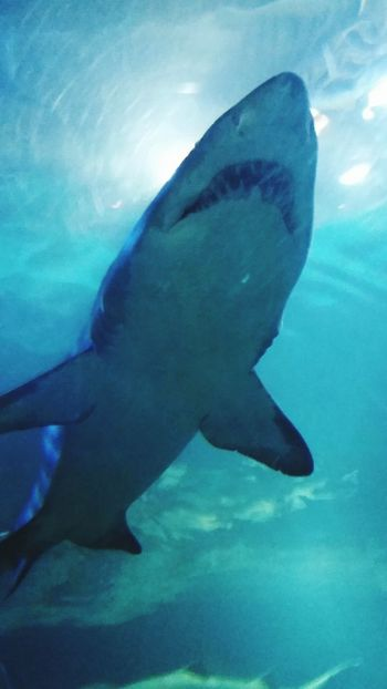 Shark Aqarium Fish Teeth Under The Sea Underwaterphotography Jaws Naturelovers