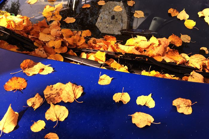 Leaf Autumn Change No People Outdoors Day Nature Yellow Beauty In Nature Car Street Windshield Wipers Windshield Glass Sunlight Colorful Blue Clean Season  Weather Driving