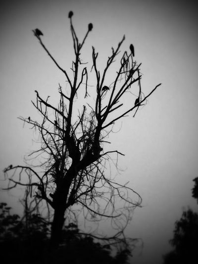 EyeEmNewHere EyeEm Best Shots EyeEm Nature Lover EyeEm Best Shots - Black + White Bare Tree Tree Branch Landscape Nature Silhouette Beauty In Nature Outdoors No People Sky Night Bird Tranquility Clear Sky Close-up Tranquil Scene Lone Day