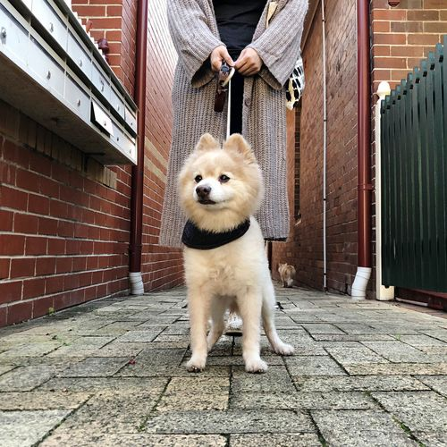 Low section of dog standing on footpath